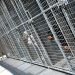 kennels inside